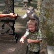 Monkeys attacking children in the monkey forest — Stock Photo
