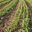 Background of newly plowed field — Stock Photo #5660926