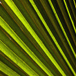 Beautiful palm leaf texture — Stock Photo