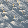 Shadow of halm on snow covered field - Foto Stock