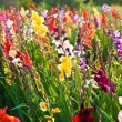 Beautiful flowers in the meadow — Stock Photo #5665158