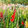 Beautiful flowers in the meadow — Stock Photo #5665160