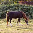 Horse on the meadow - Stock Photo