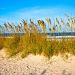 Grass at the beach on dune with blue sky — Stock Photo #5665770
