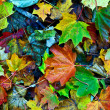 Background group autumn leaves in Indian Summer — Stock Photo #5668272