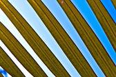 Beautiful palm leaf texture — Stock Photo