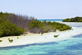 Beautiful scenic beaches and clear water in the Keys with palmes and mangro — Stock Photo