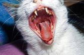 Giovane gatto in casa — Foto Stock