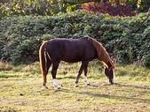 马在草地上 — 图库照片