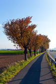Bicycle and pedestrian lane under trees — Stock Photo