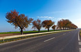 Tree alley with street — Stock Photo