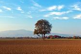 Tree in beautiful landscape — Stock Photo