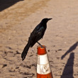 Stock Photo: Tweeting bird on pylon at beach