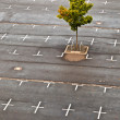 Marked parking lot without cars — Stock Photo