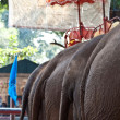 Elefants for tourist rides in Ajutthaja - Stock Photo