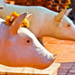 Beautiful statue of pigs as gods dressed with flowers  in temple — Стоковая фотография