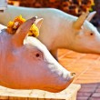 Beautiful statue of pigs as gods dressed with flowers  in temple — Foto de Stock