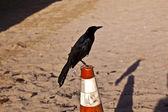 Uccello tweeting su un pilone in spiaggia — Foto Stock
