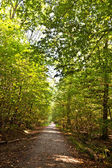 Path in forest with beautiful trees — Stock Photo