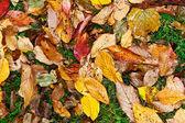 Fondo grupo colorido naranja hojas de otoño — Foto de Stock
