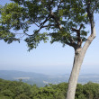 Beautiful view of the popular Blue Ridge Mountain — Stock Photo #5680901