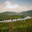 World famous sinuosity at the river Mosel near Trittenheim — Stock Photo