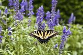 In de zomer groene natuur Butterfly — Stockfoto