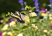 Butterfly in the meadow — Stock Photo