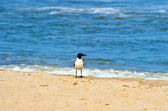 Seagull standing at the beach — Stock Photo