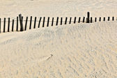 Dunes are protwected by wooden fences — Stock Photo