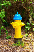 Hydrant in the park — Стоковое фото