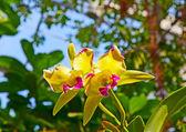 Orquídeas no jardim botânico — Foto Stock