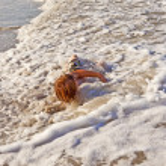 Boy lying at the beach and enjoying the sun — Stock Photo #5690516