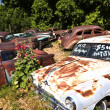 Junk yard with old beautiful oldtimers - Stock Photo