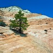 Wonderful landscape around Mt. Carmel, Zion National Parc — Stock Photo