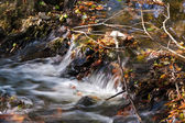 Leaves in flowing water — Stock Photo