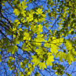 Leaves of a tree in intensive light — Stock Photo