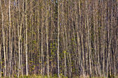Structured forest with small trees — Stock Photo