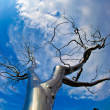 A tree of metal in the National Gallery of Art Sculpture Garden -  