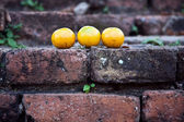 Oranges on old bricks of famous temple area Wat Phra Si Sanphet — Stock Photo
