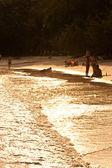 Golden beach alacakaranlıkta — Stok fotoğraf