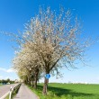 Bicycle lane under blooming tree in spring — Stock Photo