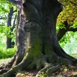 Stem of oak trees in fascinating light in park in Vienna — Stock Photo #5778637