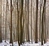 деревья зимой — Стоковое фото