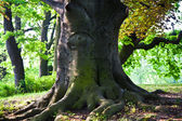 Stem of oak trees in fascinating light in a park in Vienna — Stockfoto