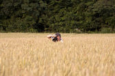 Fotographer in corn field with camera — Stock Photo
