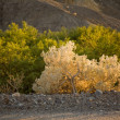 Colorful trees in afternoon light at Zabriskie Point in Death Valley — Stock Photo