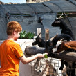 Royalty-Free Stock Photo: Boy feeding a goat