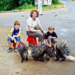 Children stroking a hedhehog — Stock Photo