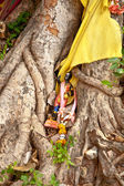 Figures around a holy tree in monastery Wat Na Phramane in Ajutt — Stock Photo